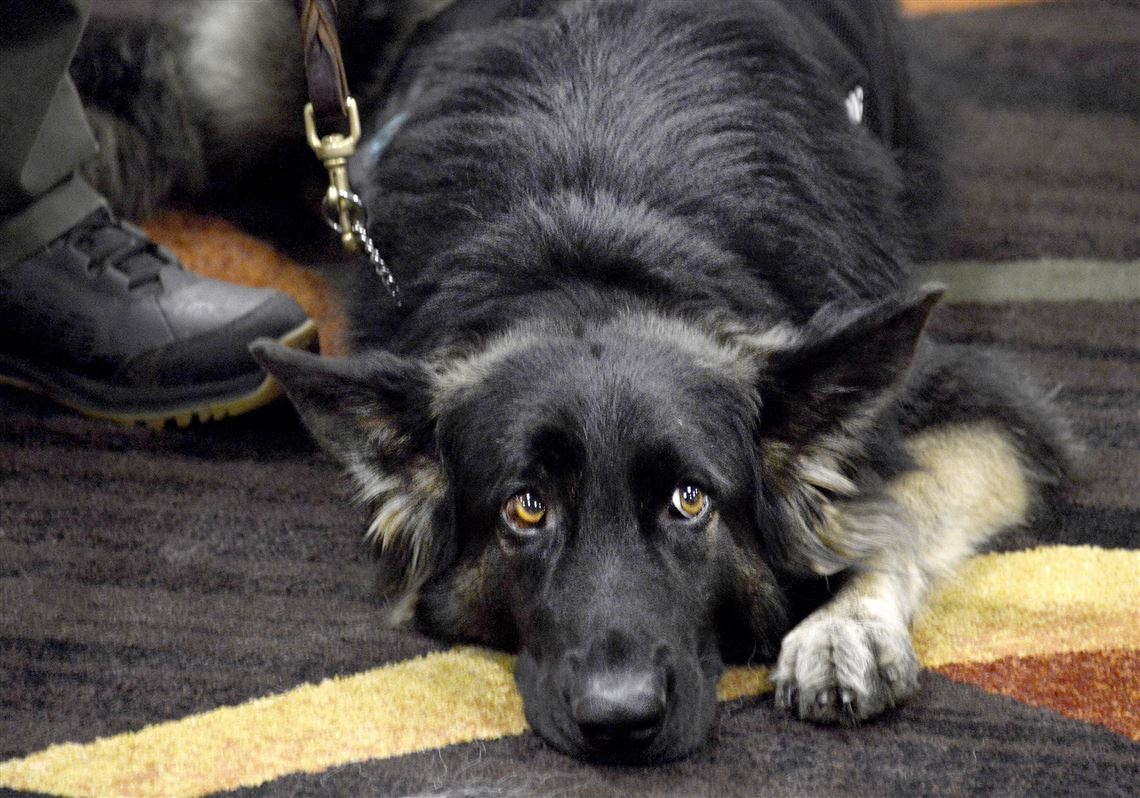 Pet Tales: Many more veterans will get service dogs