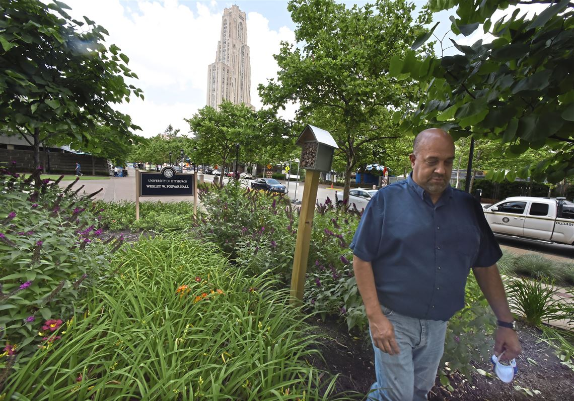 Pollinators welcome at Pitt, a new Bee Campus USA member