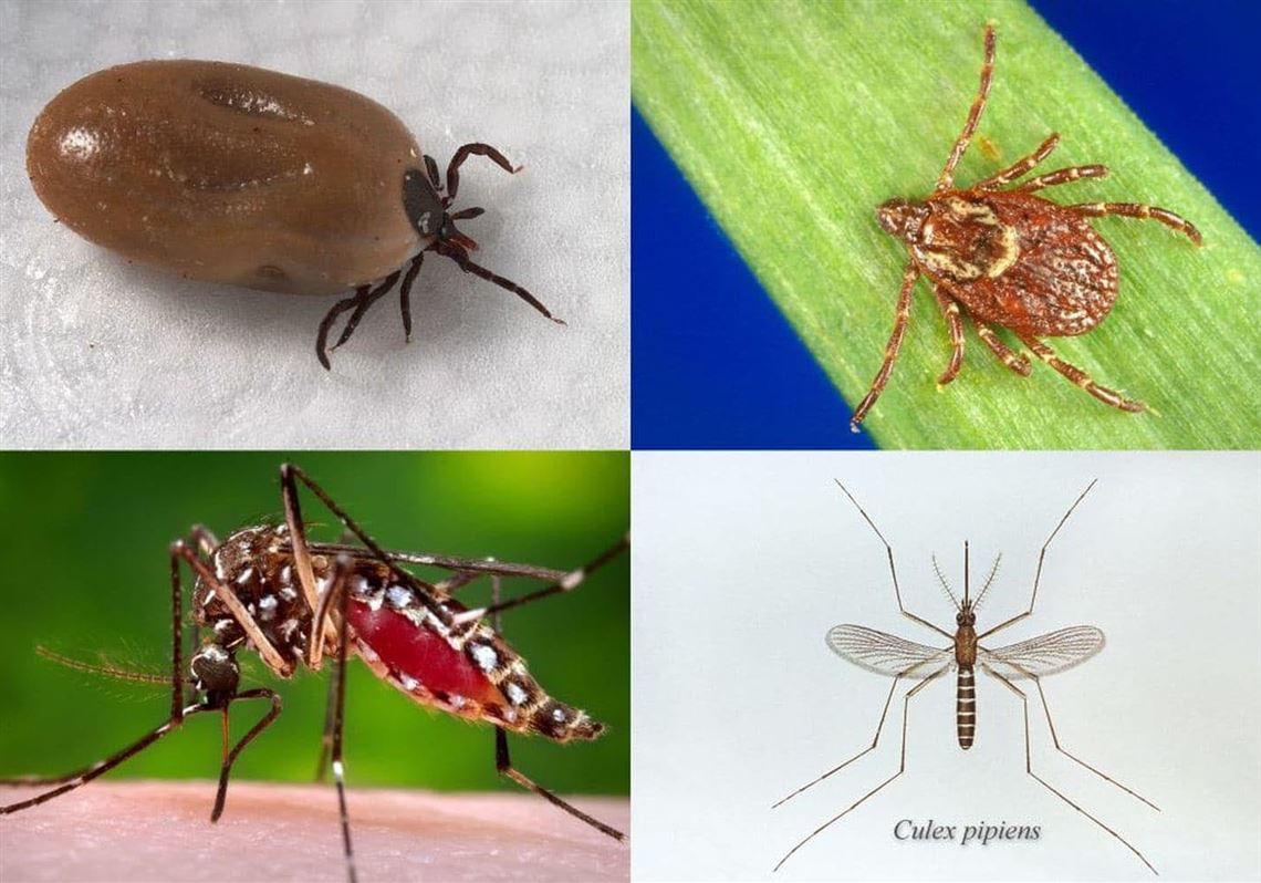 Should We Believe Centers For Disease >> What Do We Have To Thank For Reduced Lyme Disease In Pa
