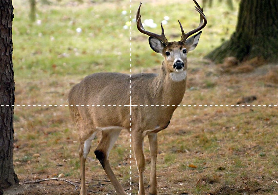 A Refresher On Deer Anatomy Can Give Hunters Their Best