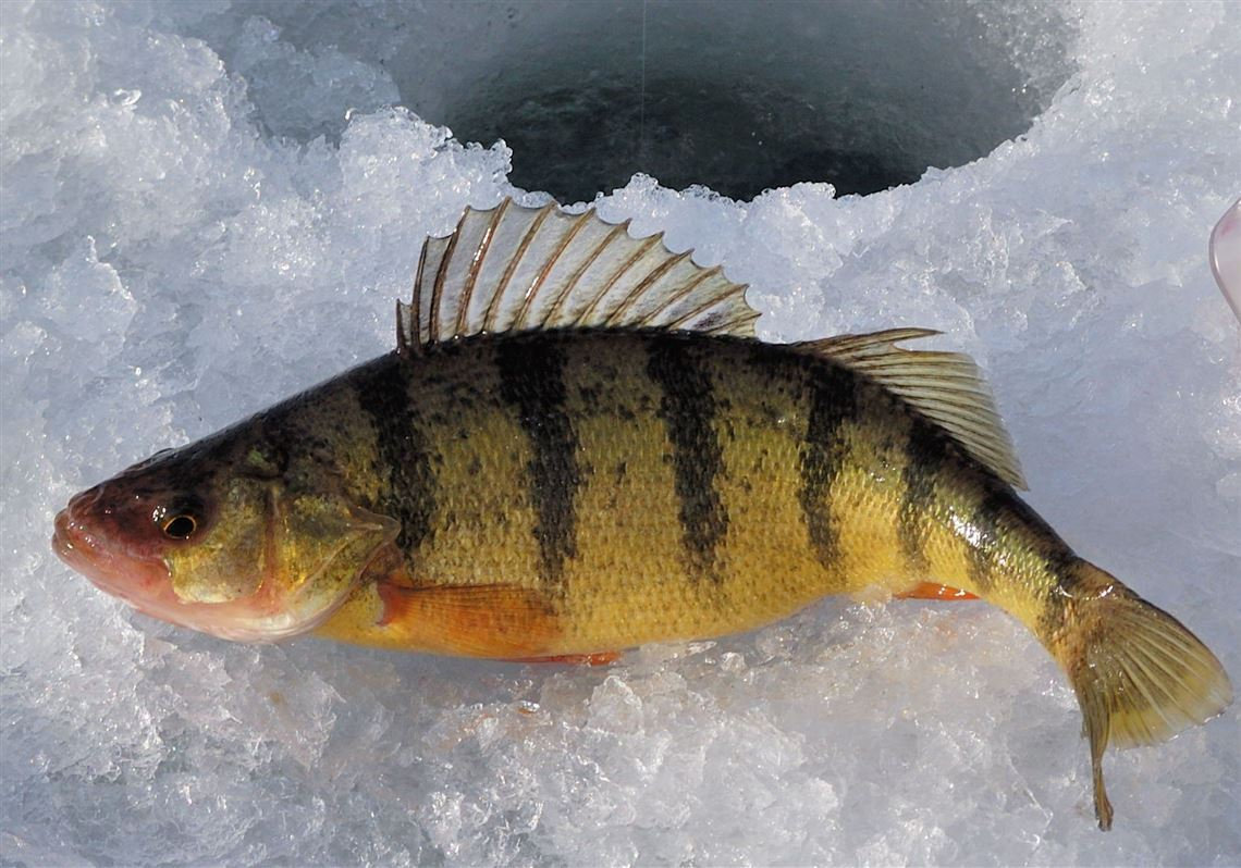 FISHING REPORT Feb  8: Thaw spoils ice fishing, but anglers