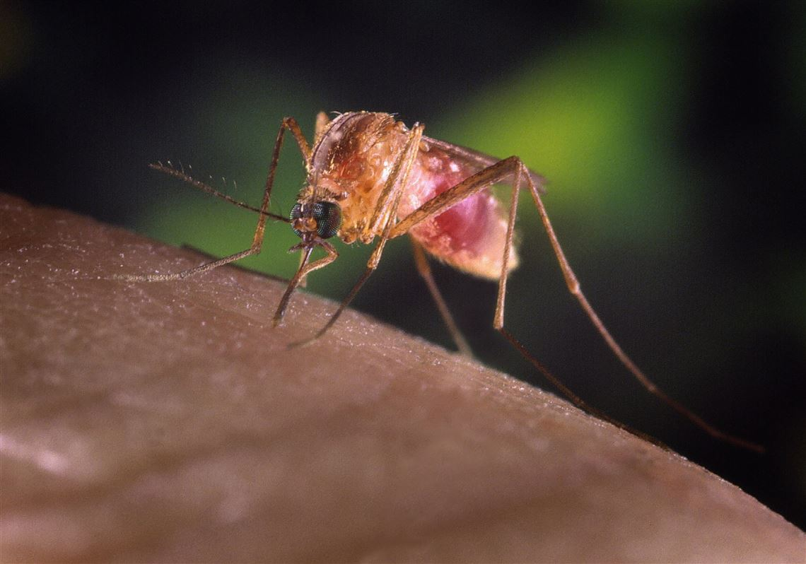 Allegheny County plans mosquito spraying to prevent West Nile virus