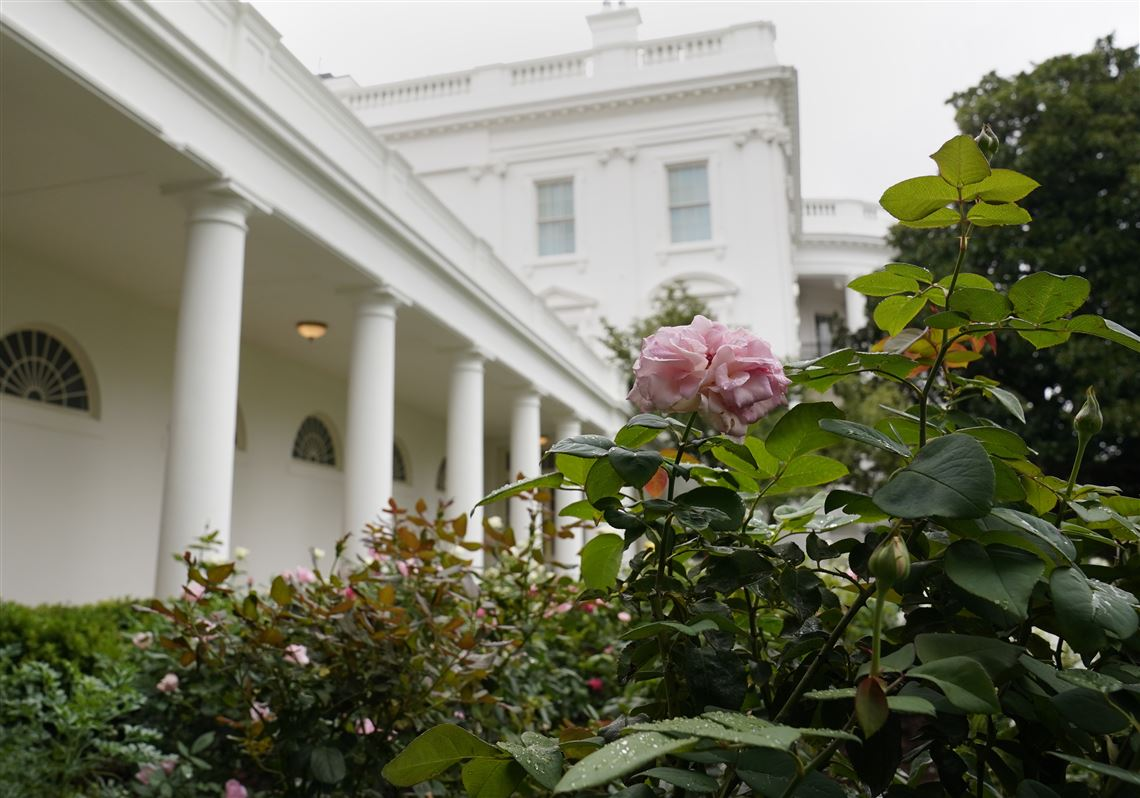 Spruced Up White House Rose Garden Set For First Lady S Convention Speech Pittsburgh Post Gazette
