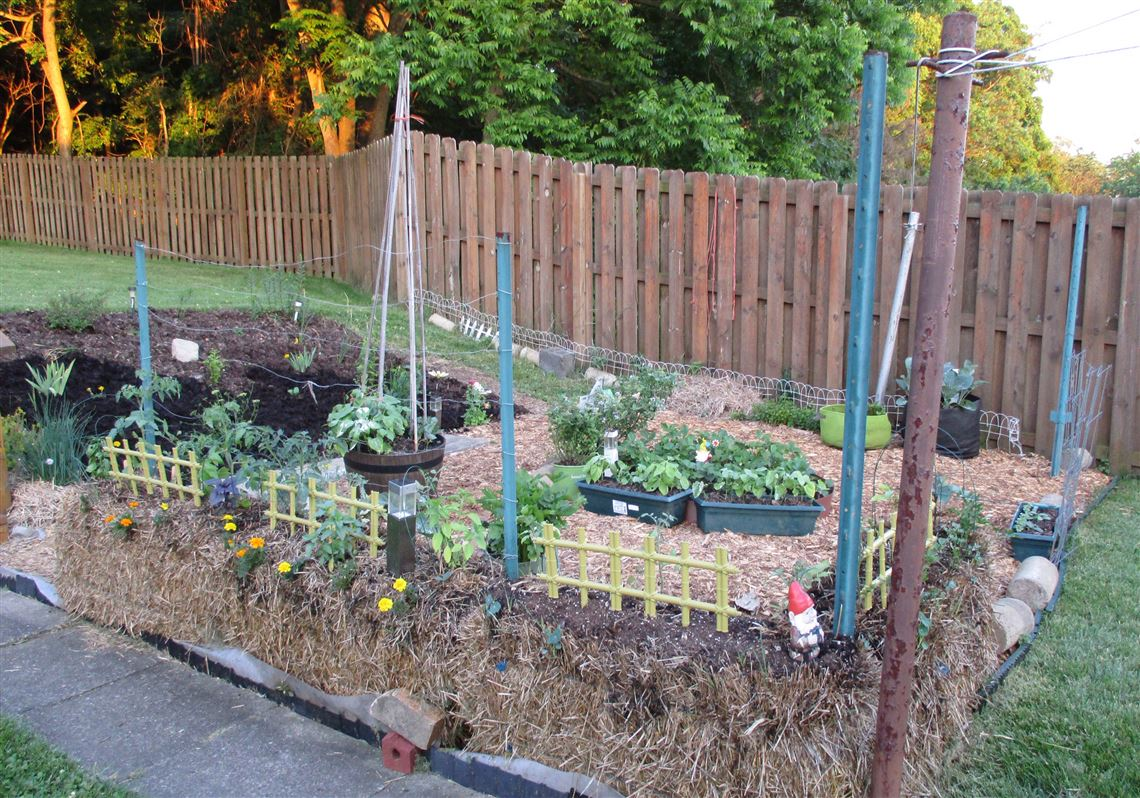 Here S How To Start A Veggie Garden Pittsburgh Post Gazette