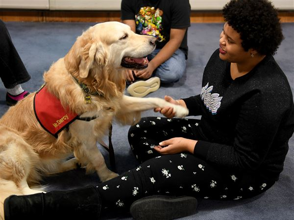 Pet Tales: Therapy dogs visit and soothe special education students